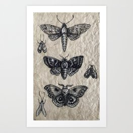 Moth studies Art Print