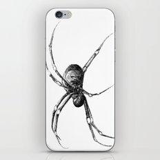 Golden Orb Weaver iPhone & iPod Skin