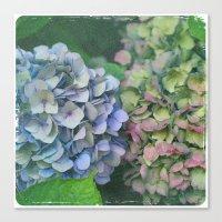 hydrangea Canvas Prints featuring hydrangea by EnglishRose23