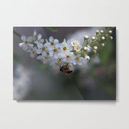 Choke Cherry Blossoms Metal Print