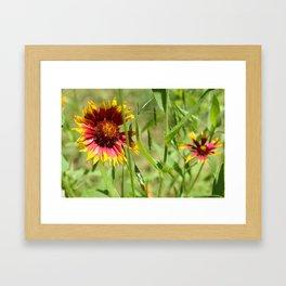 Sunbathing Wildflower Framed Art Print