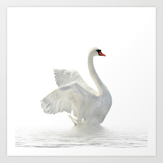 WHITE ON WHITE-BEAUTIFUL SWAN by mayalova17