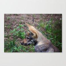 Canis Lupus Lupus Canvas Print