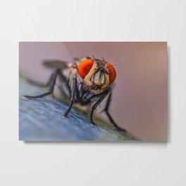 Flesh Fly. Macro Photograph Metal Print