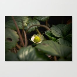 Young Strawberry Canvas Print
