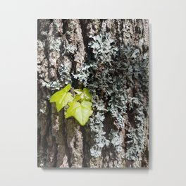 Bark with New Leaves Metal Print