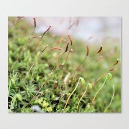 Mossy Canvas Print
