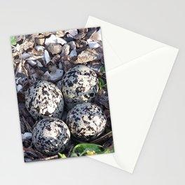 Killdeer eggs in nest Stationery Cards