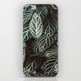 Botanical Gardens Zebra Leaf #398 iPhone Skin