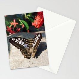 Striking Butterfly Stationery Cards