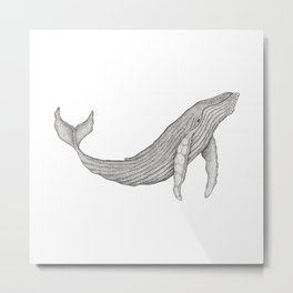 Megaptera Novaeangliae [Ted] Metal Print