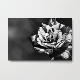 Different but beautiful, black and white wild rose flower photography Metal Print