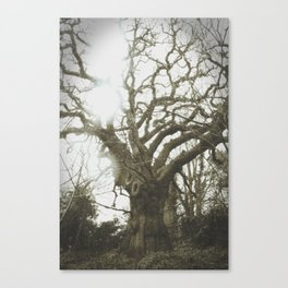Thee Olde Tree Canvas Print