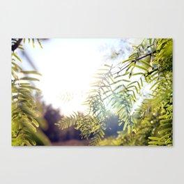 Leaves & Light Canvas Print