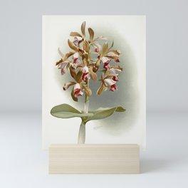 Cattleya guttata leopoldi from Reichenbachia Orchids (1888-1894) illustrated by Frederick Sander (18 Mini Art Print