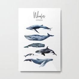 Watercolor Whales, Cetaceans, Whale Cetacea Metal Print