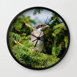 Fledgling Loggerhead Shrike Wall Clock