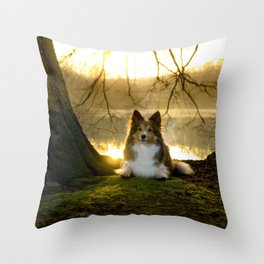 Shetland Sheepdog (Sheltie) Throw Pillow