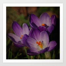 Three purple sweeties Art Print