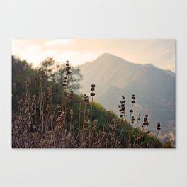 Ojai Mighty Mountain California Shine Canvas Print