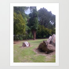 Tree Stumps Art Print