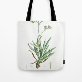 Cacalia Ficoides (Blue Chalk Stick) from Histoire des Plantes Grasses (1799) by Pierre-Joseph Redout Tote Bag