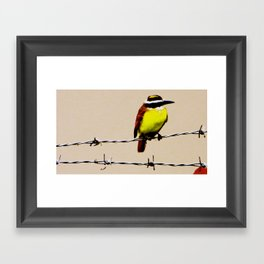 Kiskadee Framed Art Print