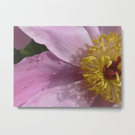 Peony Pink with Yellow Metal Print