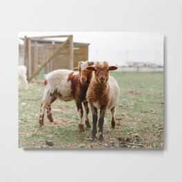 Counting Sheep Metal Print