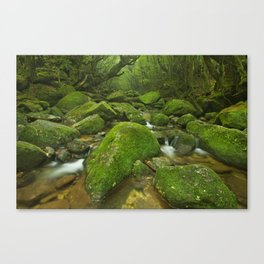 River along Shiratani Unsuikyo rainforest trail on Yakushima Island, Japan Canvas Print