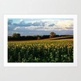 Summer sunflower field Art Print