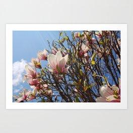 Magnolia Tree, Irvington NY Art Print