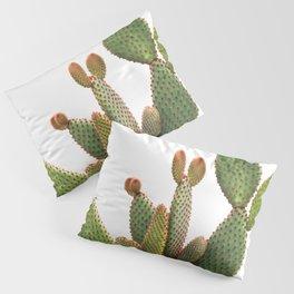 Cactus Photography Pillow Sham