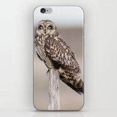 Short Eared Owl iPhone Skin