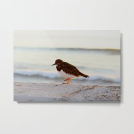 Sandpiper bird enjoying some relaxing time by the sea Metal Print