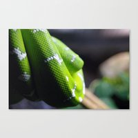 monty python Canvas Prints featuring Python by LoganGalloway