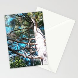 Whit Pine Stationery Cards