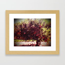 Bushel of Apples Framed Art Print