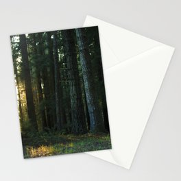 Golden Hour in the Woods Stationery Cards