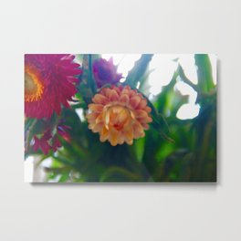 Yellow Strawflower Metal Print