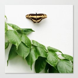 Butterfly Conservatory Canvas Print