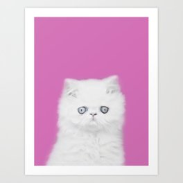 Lord Aries Cat - Photography 002 Art Print