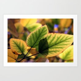 Dreamy Leaves Art Print