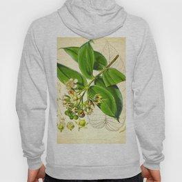 Vintage Illustration Botanical Scientific Illustration Himalayan Plants Hoody