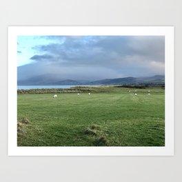 Grazing Sheep, Co Kerry, Ireland Art Print
