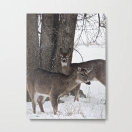 2 Deer Metal Print