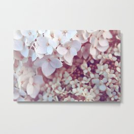 Pink and White Flowers (Color) Metal Print