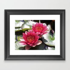 Pink Water Lily Duo Framed Art Print