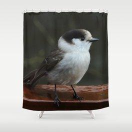 Gray Jay Shower Curtain