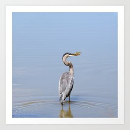 Great Blue Heron Fishing - I Art Print